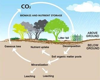 La s questration du carbone dans les sols france for 0 4 soil carbon