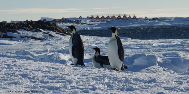 Zwischen dem 14. und 24. Juni 2021 richtet Frankreich das Treffen der Konsultativstaaten des Antarktis-Vertrags aus.